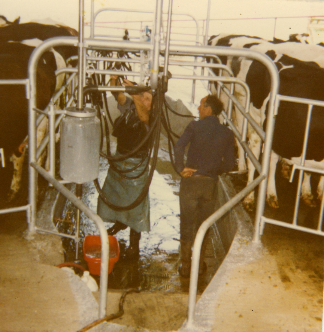 Scully // County Limerick :: Milking parlour 1978 - newly installed milking parlour