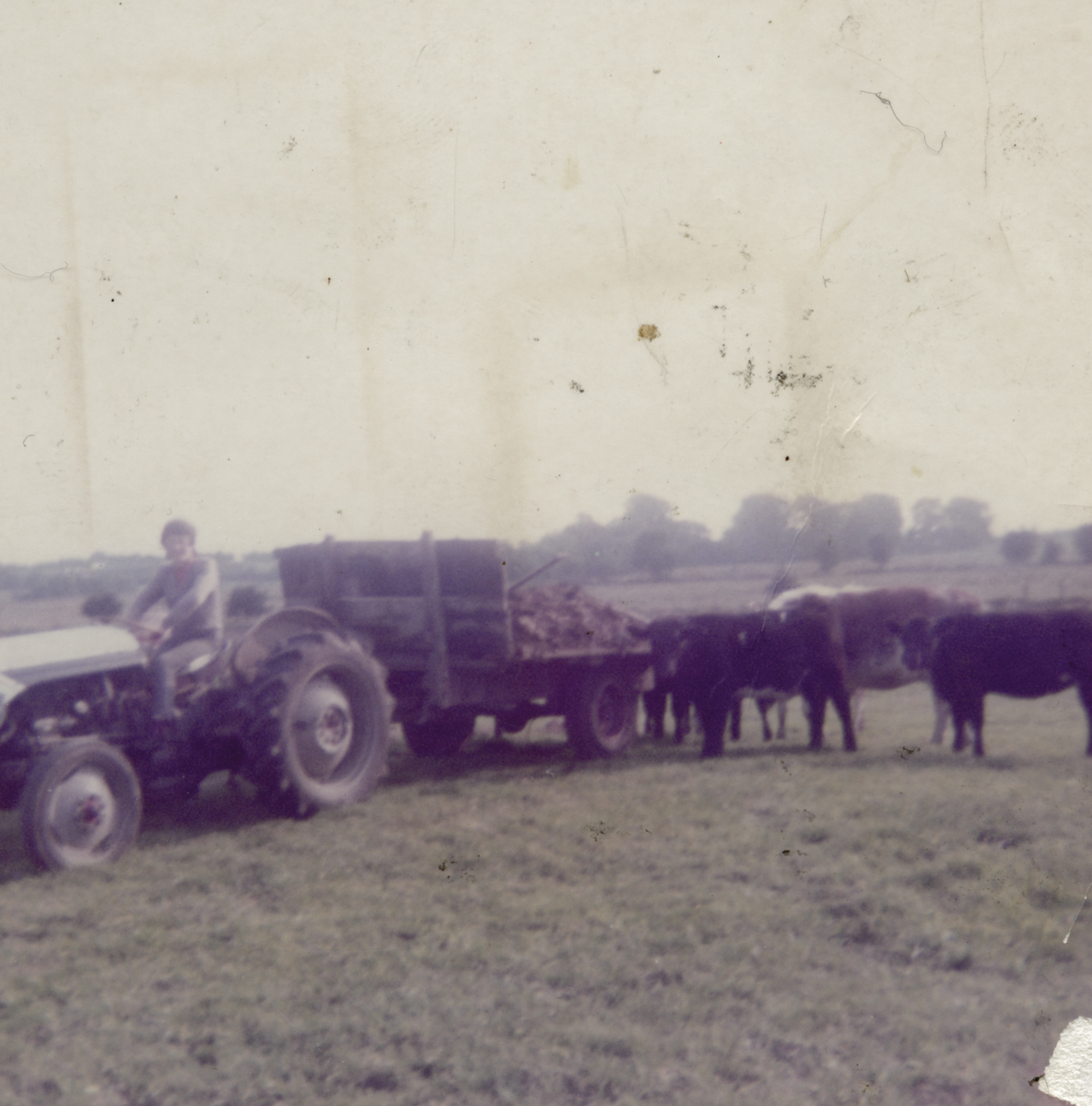 McGing // County Meath :: Austin McGing (Junior) farming in Woodtown