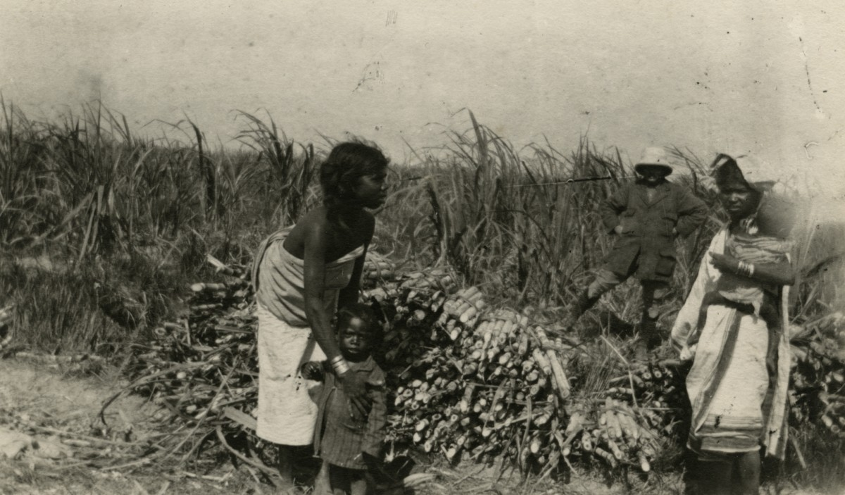 McKay  //  County Antrim :: Tea plantation workers, India