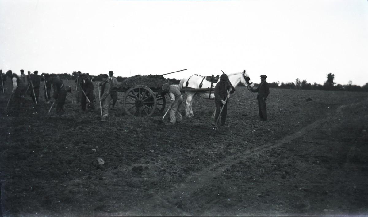 McKay  //  County Antrim :: Farm labourers