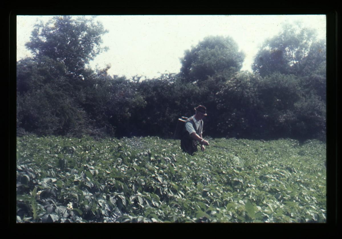 Eugene Clerkin Archive :: James Mullan spraying the potatoes in Monaghan