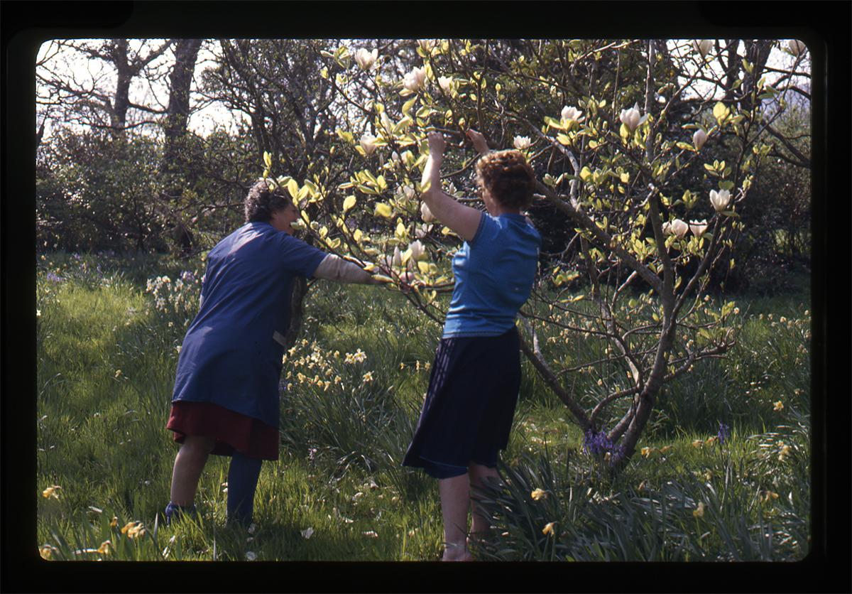 Declan Gilroy Archive // County Sligo :: In the garden