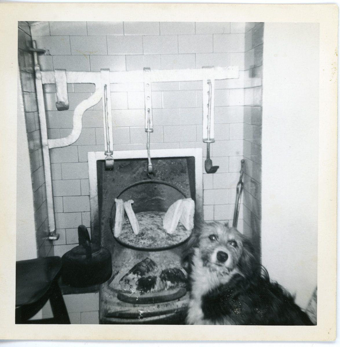McNally // Boston & Lurgan :: Lassie at the hearth eyeing the soda bread in Kate McConville's kitchen, Derrycor, Craigavon, N.Ireland. About 1963